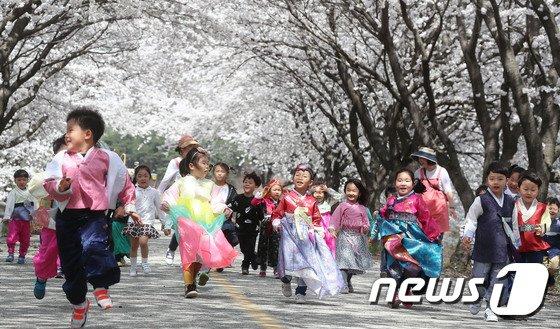[사진]벚꽃보다 동심