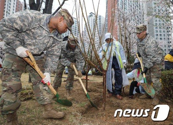 [사진]용산에 나무 심는 주한미군 장병들