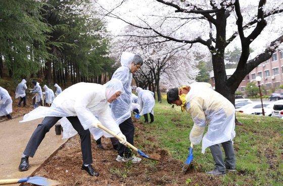 군산대, 식목일 기념 산수국 2천 주 식재
