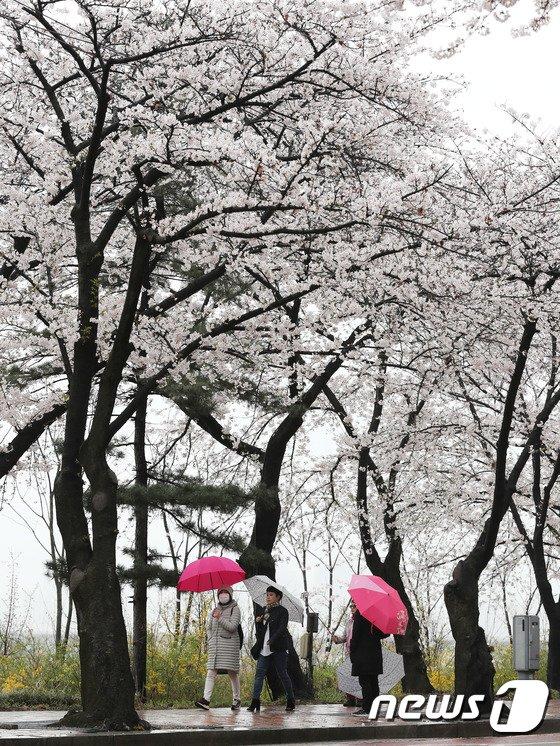 [사진]'기분이 좋아지는 봄비'