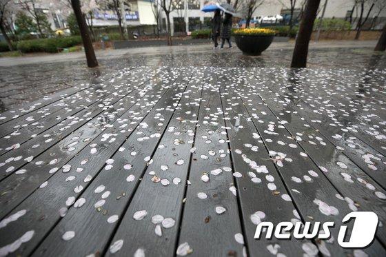 [사진]봄비에 떨어진 꽃잎