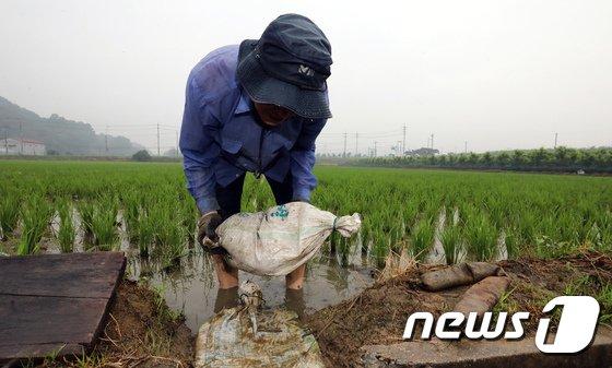 [사진]장마 시작, 논에 물 가두는 농민