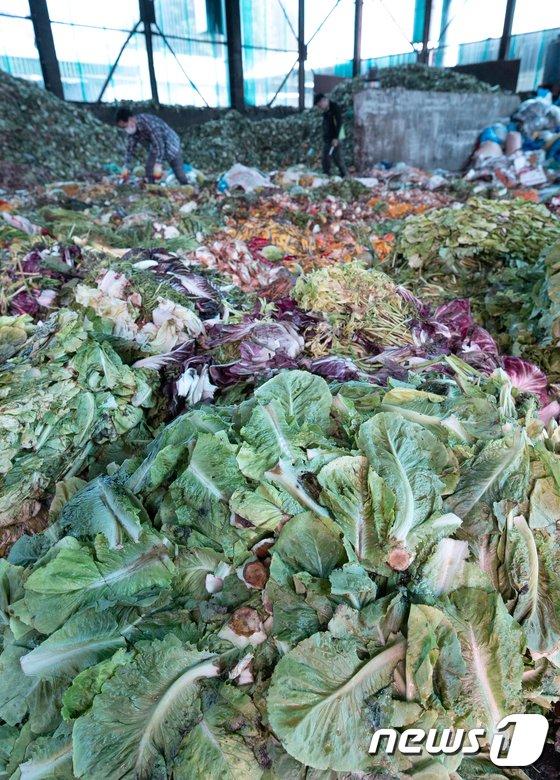 [사진]이어지는 폭염에 버려지는 농산물
