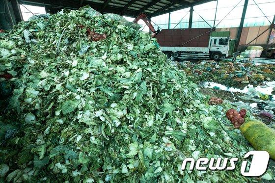 [사진]폭염에 버려진 농산물 '산더미'