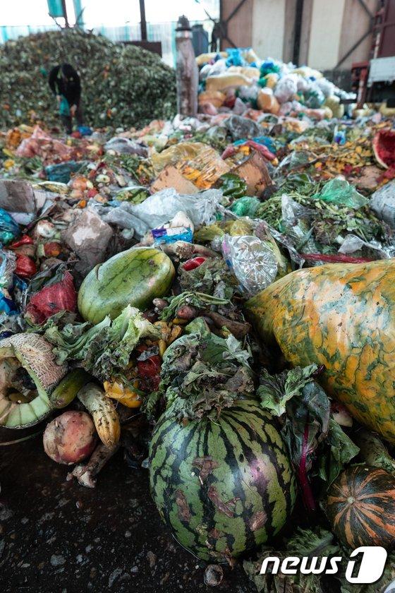 [사진]폭염은 이어지고 농산물은 버려지고