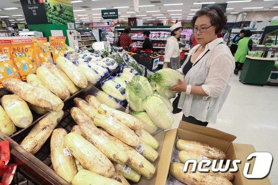 [사진]폭염으로 두 배 오른 배추...'너무 비싸네'