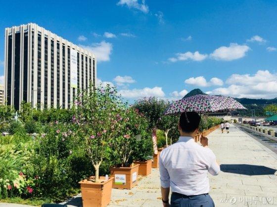 꽃무늬 양산을 들고 광화문광장을 걷고 있는 기자. 양산이 다소 작았지만 더위를 피하기엔 충분했다. 후배 기자에게 음료 한 잔을 사준 뒤 사진을 찍도록 시켰다. /사진=남궁민 기자