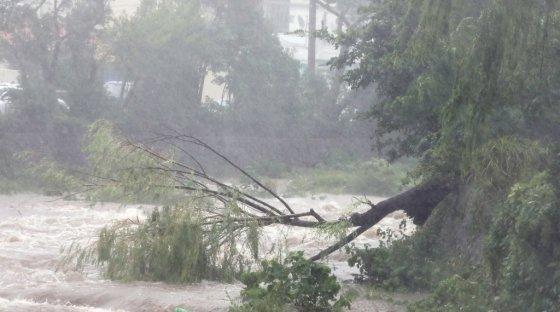 강풍에 부러진 나무/사진=뉴스1