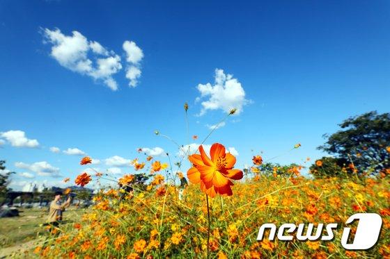 [사진]가을 옷으로 갈아입은 한강공원