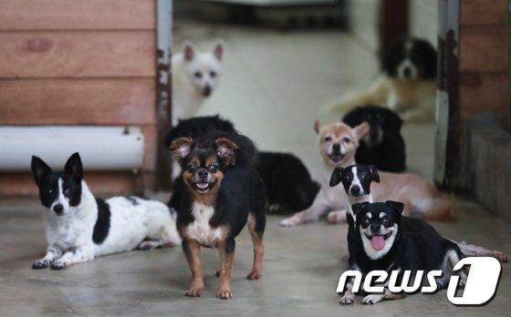 지난 8월 경기도 안성시 사설 유기견 보호소 '행복한 보금자리'에서 보호되고 있는 유기견들이 주인을 기다리는 모습. /사진제공= 뉴스1