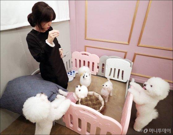 지난 7일 반려견 유치원에 등원한 반려견들이 선생님과 놀이를 하고 있는 모습. /사진= 김창현 기자