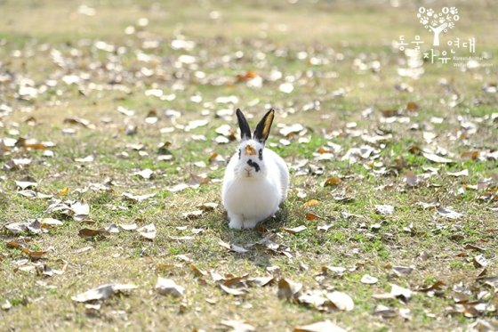 [개人주의]토끼는 '몽마르뜨'로 돌아올 수 있을까