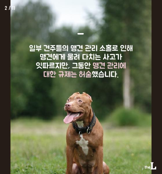 """[카드뉴스] """"우리 개는 안 물어요"""""""