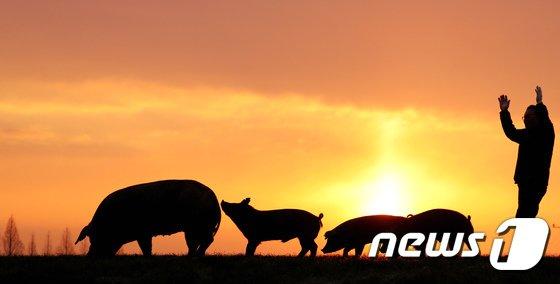[사진] 황금돼지의 해 '모두가 풍요로워 지길'