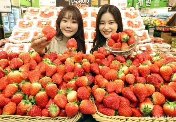 [사진]롯데마트, '신선한 설향 딸기 맛보세요'