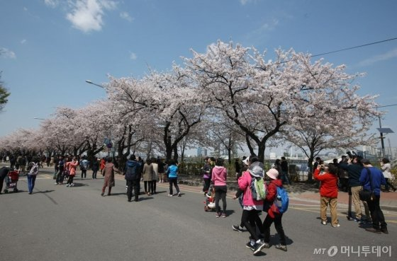 """""""한강 봄꽃으로 피다"""" 이번 주말부터 봄꽃과 즐길거리 가득한 한강 봄꽃 축제 개최"""