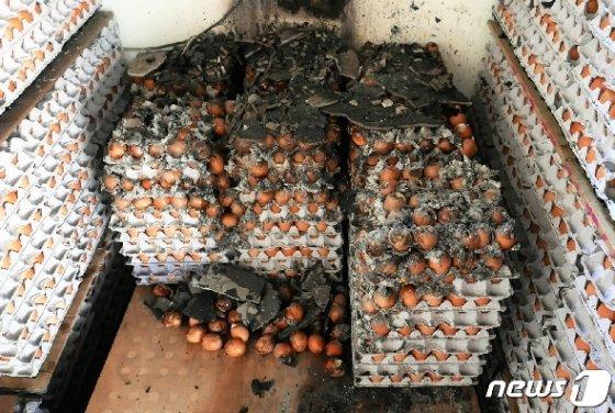 강원 고성·속초 일대 산불이 이틀째 계속된 5일 오후  속초시 영랑동 한 창고에 놓인 계란이 까맣게 타 있다. 2019.4.5/뉴스1 © News1 황덕현 기자