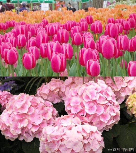 고양국제꽃박람회에서는 장미와 튤립을 비롯해 5000여종에 달하는 꽃을 볼 수 있다. /사진=김소영 기자