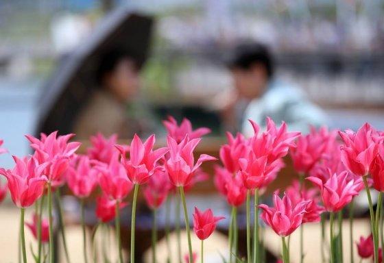 서울식물원이 정식 개장한 1일 오후 서울 강서구 서울식물원에 관람객들이 공원에서 휴일을 즐기고 있다. /사진=뉴시스