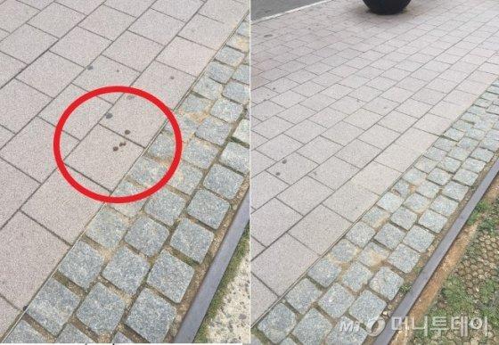 강아지 똥은 상태 확인 했으면 바로바로 치웁시다. 연트럴파크에 있던 응아 세 덩어리를 치웠다./사진=남형도 기자