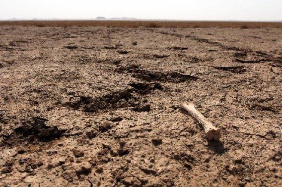 사막화가 빠르게 진행 중인 몽골 고비 사막. 아이들에게 어떤 지구를 남겨줄 것인지, 우리에게 달렸다./사진=머니투데이db