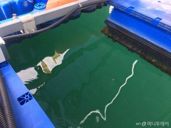 청풍호 수상태양광발전소 모듈 아래로 치어들이 눈에 띄었다./사진=우경희 기자