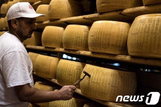 이탈리아 파르마지노 레자노 치즈휠. © AFP=뉴스1