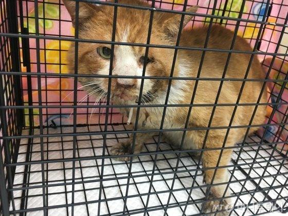 구내염에 걸린 고양이. 그 고통이 이루 말할 수 없이 심하다고 한다./사진=팅커벨프로젝트