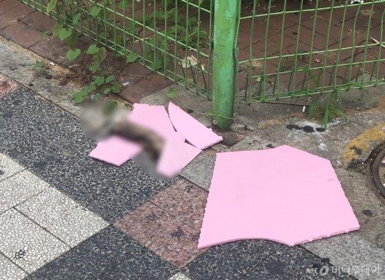 동네에서 발견한 길냥이의 마지막 장면. 머리가 분홍빛 판자에 덮힌 채 싸늘하게 식어 있었다. 그걸 보고 길 위의 고단한 삶을 짐작하고 싶어졌다./사진=남형도 기자