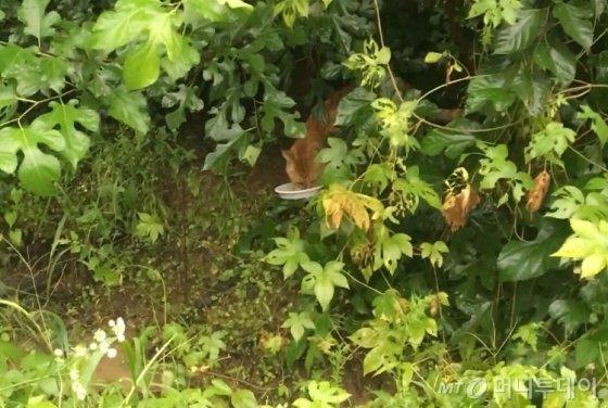 풀숲에서 고개를 빼꼼 내민 노란 길냥이. 어찌나 맛있게 먹는지./사진=남형도 기자