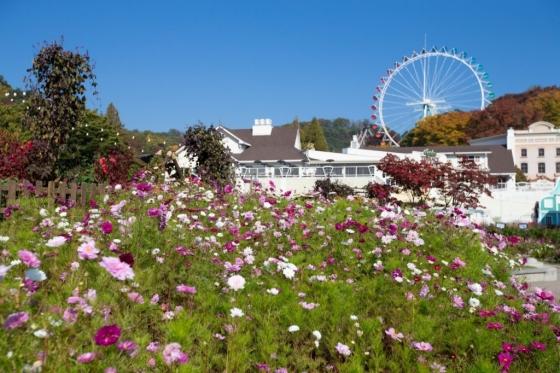 약 1천만 송이의 가을 대표 꽃들이 호박과 함께 전시돼 있는 '에버랜드 조이풀 위키드 가든' /사진=에버랜드