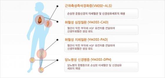 헬릭스미스가 개발 중인 신약 'VM202'의 치료 효과 설명자료. /자료=헬릭스미스 홈페이지
