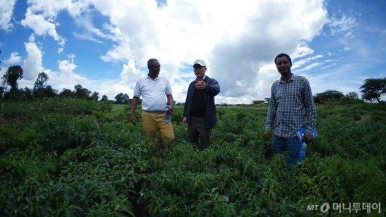 에티오피아 KOPIA센터 배도함 소장이 지난 2일 아디스아바바 인근 시험장에서 EIAR 관계자들과 함께 고추작물 재배상태를 살펴보고 있다./사진=농촌진흥청