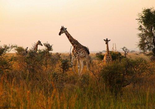 우간다의 퀸 엘리자베스 국립공원/사진=공원 홈페이지 공개사진