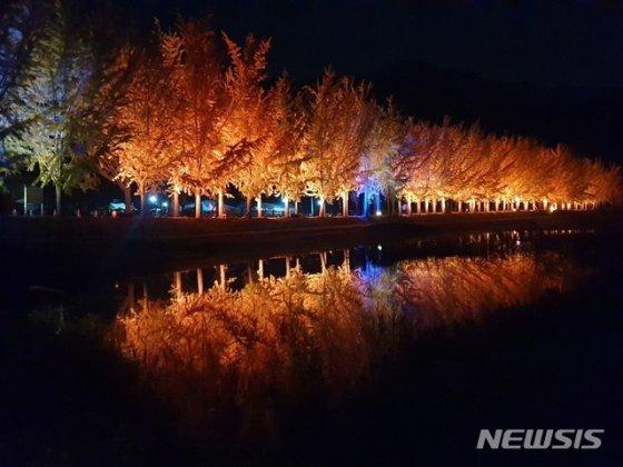 [포토 is]온통 '노랑'…충북 괴산 은행나무길 이번주 절정