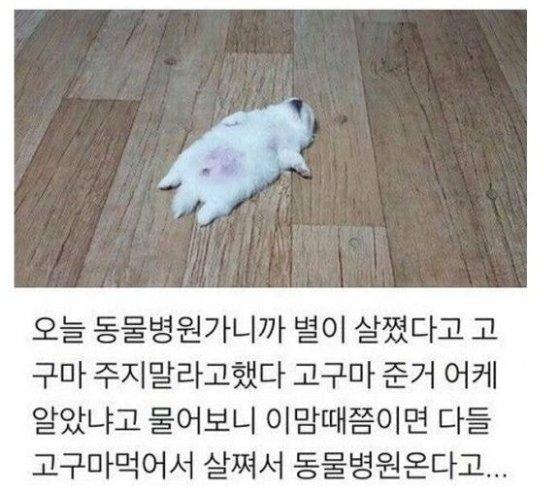 강아지가 고구마를 먹고 살쪘다는 온라인 커뮤니티 게시글. / 사진 - 온라인 커뮤니티 캡쳐