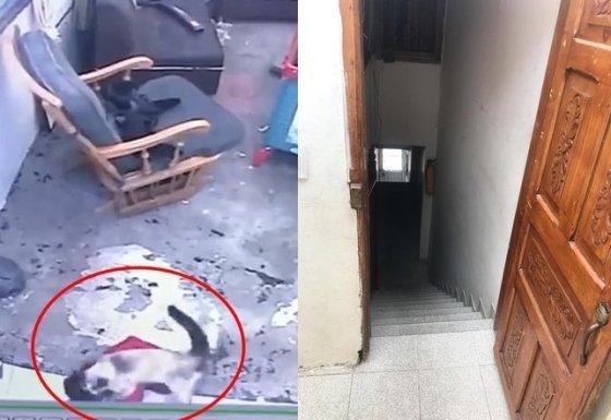 고양이가 아기를 구하는 모습과 아기가 기어가려고 한 계단. / 사진 = 대만 매체 ETTODAY
