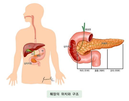 췌장의 위치와 구조./사진=국가암정보센터