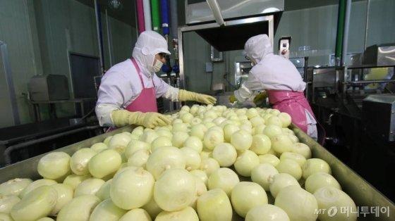 CJ프레시웨이 직원들이 지난 5월 제이팜스 공주 공장에서 양파 세척(전처리)작업을 하고 있다. 이 양파는 충남 서산에서 계약재배한  농산물로 외식업체나 단체급식장으로 공급된다./사진=농식품상생협력추진본부