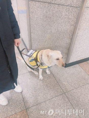 시각장애인 김정빈씨와 그의 안내견 메이. 지하철 승강장에서 지하철을 기다리고 있다./사진=남형도 기자