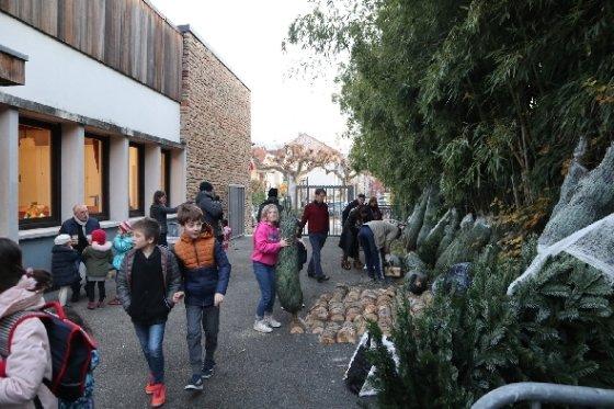 코렁 시의 한 학교가 크리스마스 트리를 판매하고 있다.<정경화 통신원 제공>