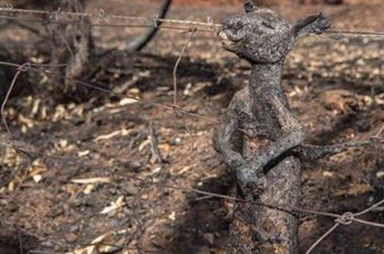 호주의 대형 산불로 인해 타 죽은 캥거루. / 사진 = 미국의 서퍼 켈리 슬레이터( Kelly Slater) SNS 캡처
