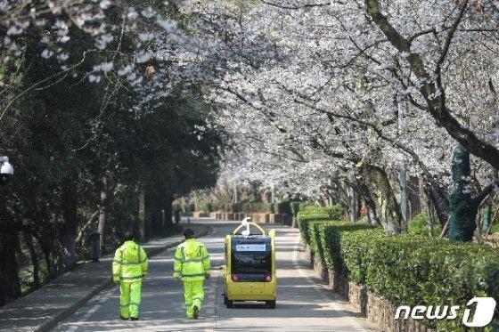 17일 중국 후베이성 우한의 우한대학 캠퍼스에 벚꽃이 피어 있다. © AFP=뉴스1