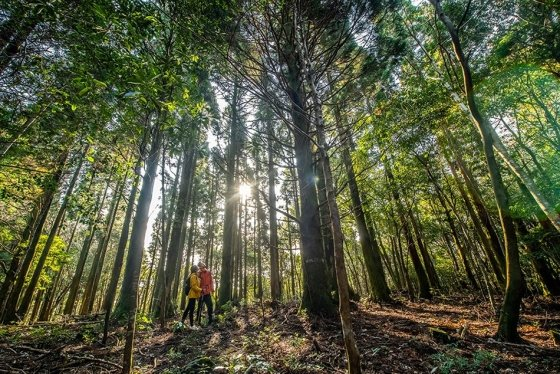 제주신라호텔은 최근 '언택트' 트렌드에 맞춰 사람을 마주치지 않고 자연에서 휴식을 즐길 수 있는 '웰니스' 프로그램을 담은 '신라 포 유' 패키지는 내놨다. /사진=제주신라호텔