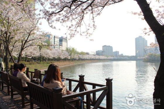 석촌호수 벚꽃축제 / 사진제공=한국관광공사