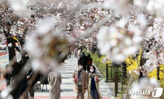 28일 오후 서울 영등포구 여의서로 봄꽃길. 2020.3.28/뉴스1 © News1 이동해 기자