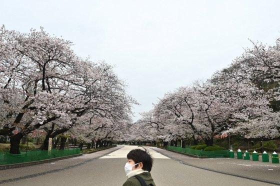 지난 30일 도쿄 벚꽃명소인 우에노 공원이 한산한 풍경을 보이고 있다./사진=AFP