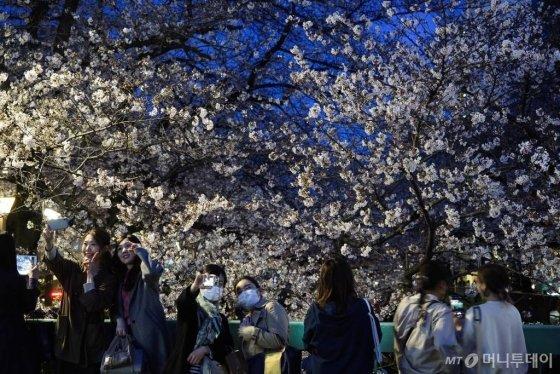 [도쿄=AP/뉴시스]지난 26일 도쿄에서 시민들이 벛꽃을 배경으로 사진을 찍고 있다. 27일 도쿄도는 신종 코로나바이러스 감염증(코로나19) 확산 방지를 위해 꽃놀이 자제 요청을 내렸다. 20120.03.27.
