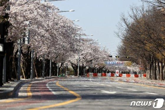 [사진] 여의도 벚꽃길 '차량 및 보행자 통행 금지'