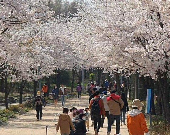 시민들이 지난 4일 꽃 구경을 위해 서울 성동구 서울숲 공원 벚꽃길을 찾고 있다. /사진=정경훈 기자.